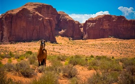 Preview wallpaper USA, Arizona, Utah, monument Valley, horse, desert