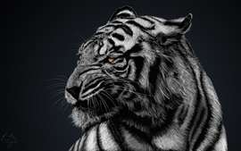 Preview wallpaper White tiger, black background
