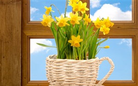Preview wallpaper Yellow flowers, daffodils