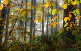 Preview wallpaper Autumn, forest, trees, leaves