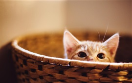 Preview wallpaper Cute kitten hidden in basket