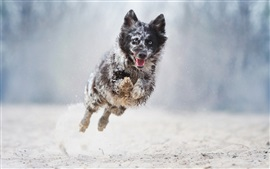 Preview wallpaper Dog running and jump, bokeh