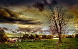 Preview wallpaper Farm field, horses, trees, house, clouds, HDR style
