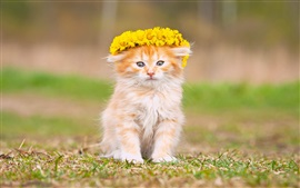 Fluffy kitten, yellow flowers, wreath