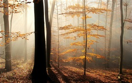 Preview wallpaper Fog, trees, leaves, sun rays, autumn