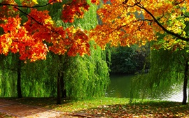 Forest, autumn, leaves, river