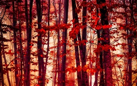 Forest, trees, red leaves, autumn