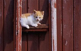 Kitten sit, wood gate