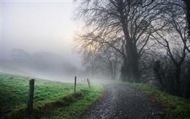 Manhã, estrada, névoa, árvores