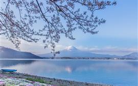Mount Fuji, lago Kawaguchi, Japão, galhos, flores