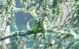 Preview wallpaper One pair parrots, green birds, tree