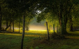 Preview wallpaper Park, fog, morning, trees, grass, summer