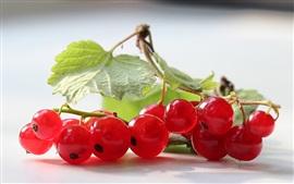 Aperçu fond d'écran Fruits rouges, feuilles