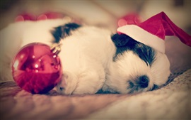 Preview wallpaper Shih Tzu, dog sleep, Christmas