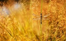 预览壁纸 夏天,青草,露珠,眩光,蜻蜓