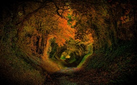 Preview wallpaper Trees, hole, nature, forest, road, autumn, colors, leaves