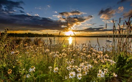 Preview wallpaper West Yorkshire, England, lake, daisies, sunset