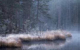 Otoño, bosque, río, niebla, oscuridad