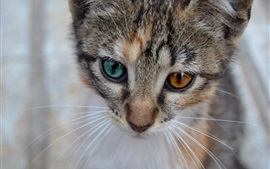 Preview wallpaper Cat face, whiskers, bokeh