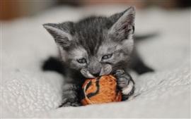 미리보기 배경 화면 귀여운 새끼 고양이 놀이 장난감