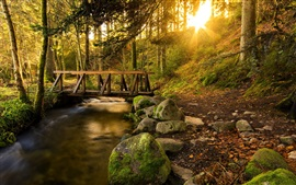 Forest, trees, creek, trail, bridge, stones, sun rays