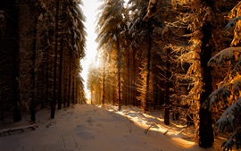 Germany, winter, snow, forest, sun rays