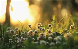 Morning light, grass, plants, flowers, sun rays