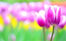 Preview wallpaper Pink flowers, tulips, blur