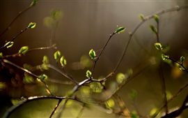 Brotos de plantas, primavera, bokeh