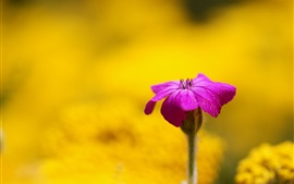 Purple flower, yellow background, blur