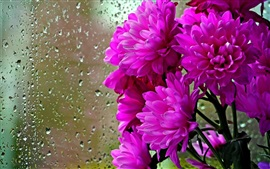 Preview wallpaper Purple flowers, glass, water drops