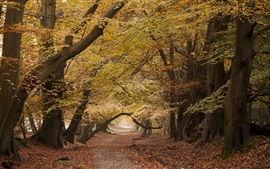 Road, trees, autumn, nature scenery