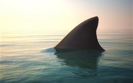 tiburón, aleta, agua, marino