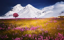 Preview wallpaper Snow mountain, pink wild flowers, grass