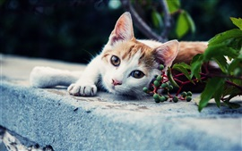 White brown cat, look, green berries