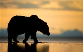 Preview wallpaper Alaska, bear, sunset, silhouette