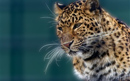 Animal portrait, jaguar, mustache