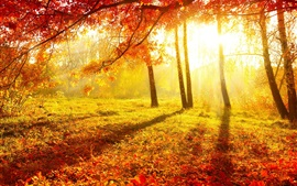 Beautiful autumn, forest, trees, red leaves, grass, sun rays