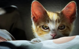 Preview wallpaper Cute kitten, face, eyes