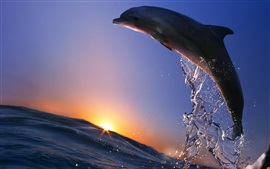 Dolphin jump, oceano, mar, spray, pôr do sol