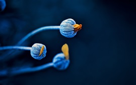 Preview wallpaper Flower buds, blue, black background
