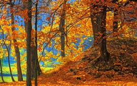 Preview wallpaper Forest, trees, red leaves, ground, autumn