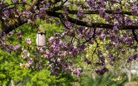 Preview wallpaper Garden, spring, cherry flowers