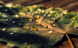 Preview wallpaper Leaf macro, water drops, sunlight