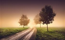 Mañana, niebla, neblina, árboles, camino