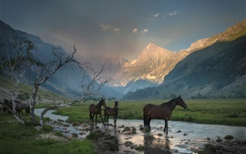 Preview wallpaper Mountains, canyon, mist, stream, grass, horse