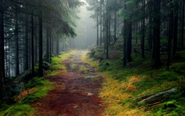 Nature landscape, forest, trees, road, mist