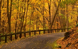 Park, trees, yellow leaves, road, autumn