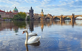 Preview wallpaper Prague, Czech Republic, Charles bridge, river, houses, Vltava, swans