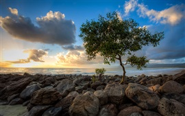 Preview wallpaper Sea, rocks, lonely tree, sky, clouds, sunset